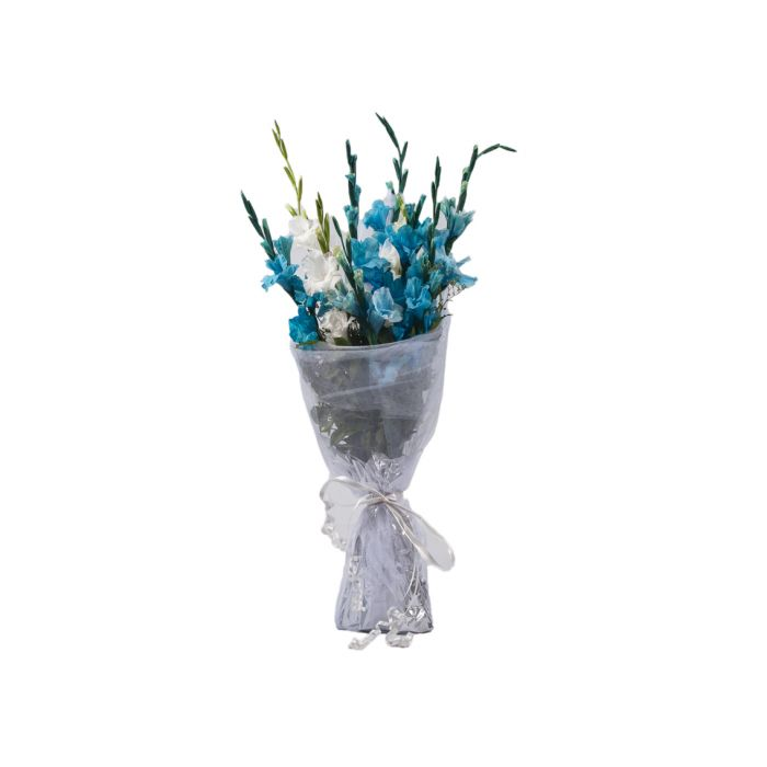 Blue & White Gladiolus